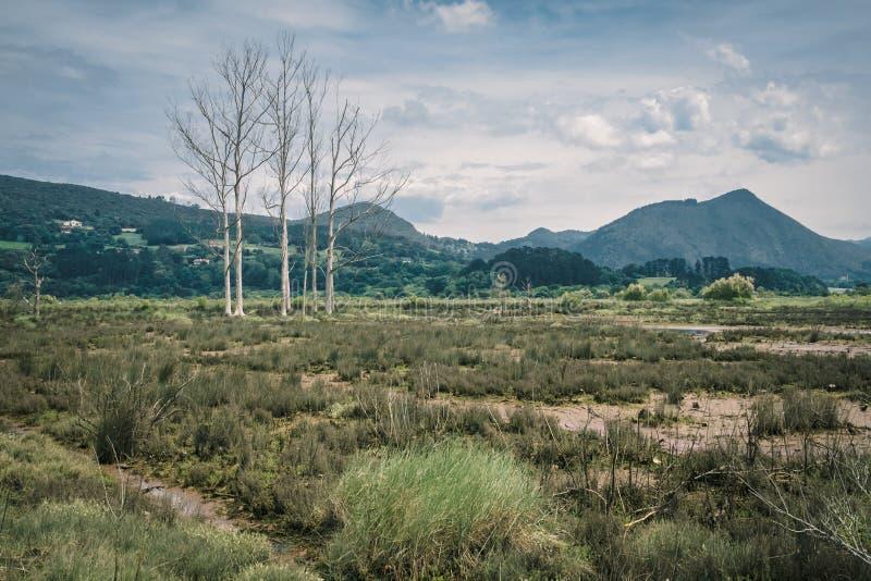 Regi?es pantanosas e p?ntanos na reserva da biosfera de Urdaibai no pa?s Basque foto de stock