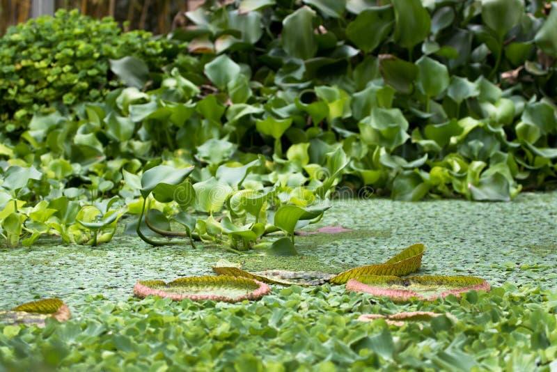 Regia Виктория - университет ботанического сада Байройта стоковое фото