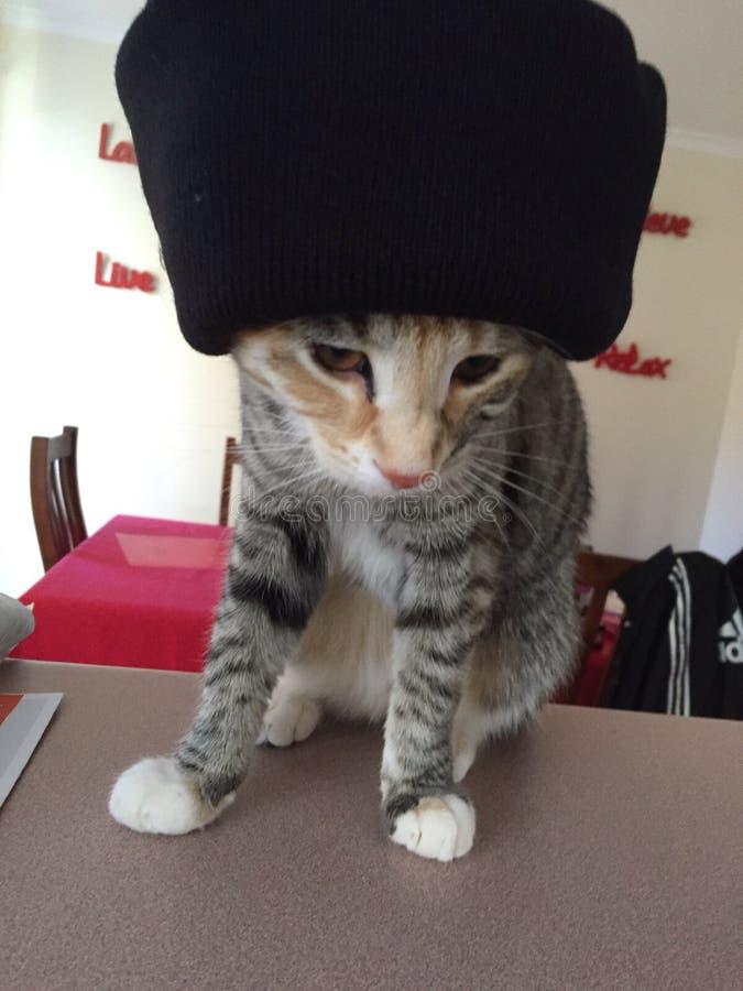 Regina Cleo il gatto che porta un beanie fotografia stock libera da diritti