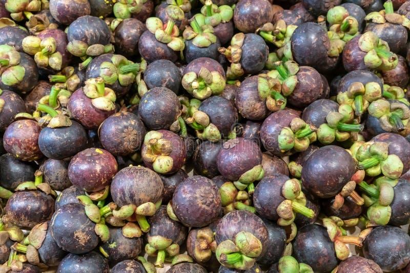 Regina del mangostano di frutta Fondo rosso del mangostano di frutti sani, mangostano scuro, mangostano scuro immagine stock libera da diritti