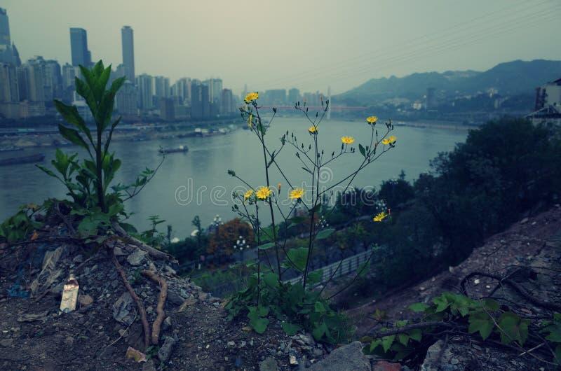 Region dzicy kwiaty fotografia stock
