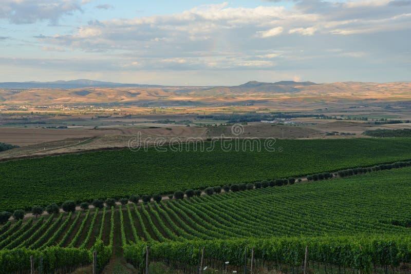 Region Sardinia, Włochy Winnicy krajobraz obrazy stock