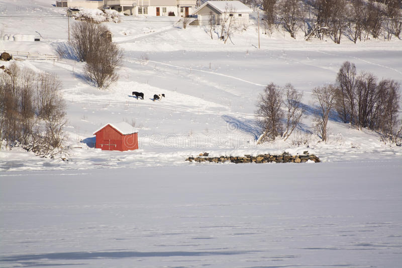 The region Troms, Norway. Landcsape in the region Troms in Norway in winter time royalty free stock photos