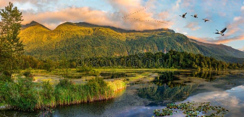 Regionala Cheam sjövåtmarker parkerar, Rosedale, British Columbia, C arkivbild