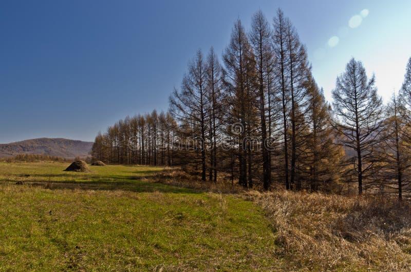 Regione di Xing'an all'autunno, Mongolia Interna, Cina immagini stock