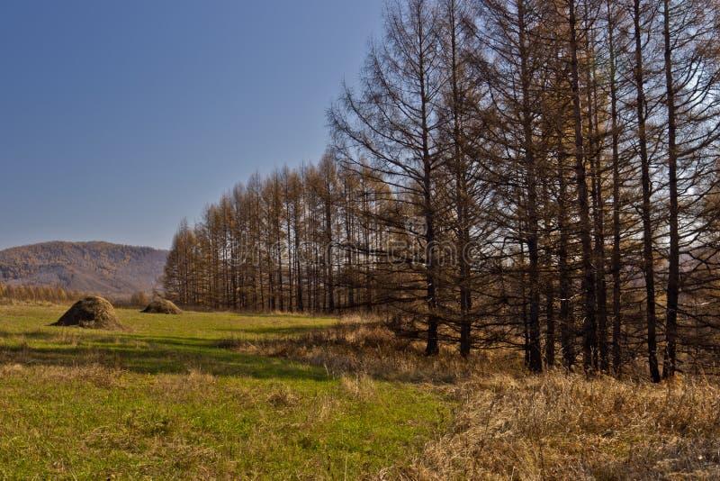 Regione di Xing'an all'autunno, Mongolia Interna, Cina immagine stock libera da diritti