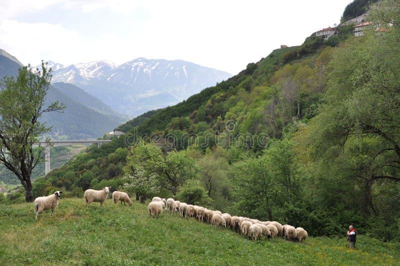 Regione Grecia del Nord di Metsovo immagine stock libera da diritti