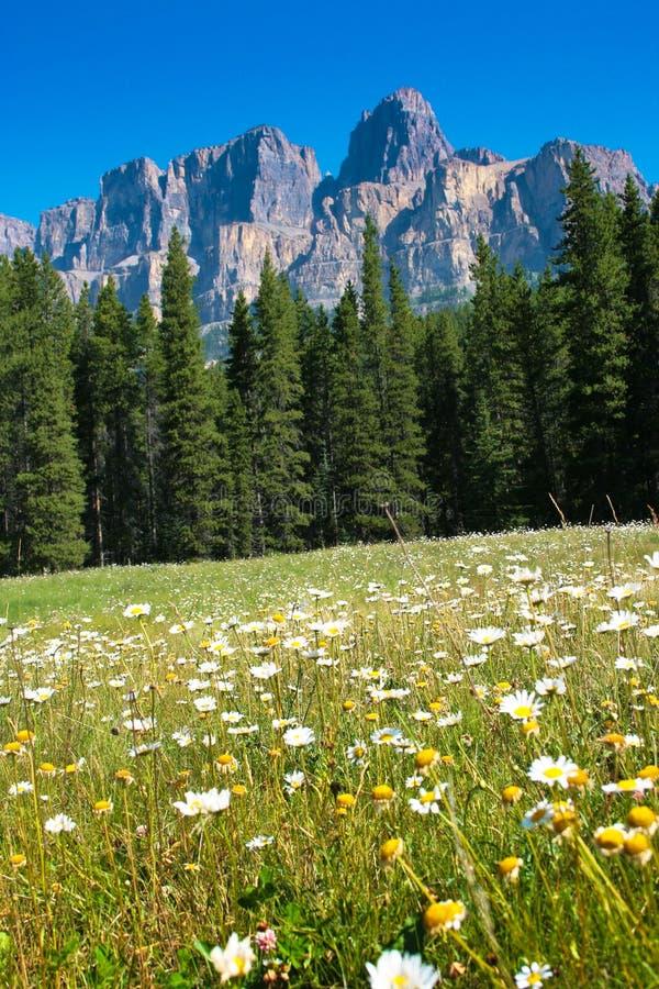 Regione selvaggia canadese fotografie stock libere da diritti