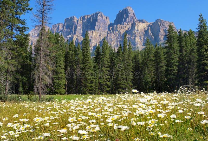 Regione selvaggia canadese nella sosta nazionale del Banff, Canada immagine stock