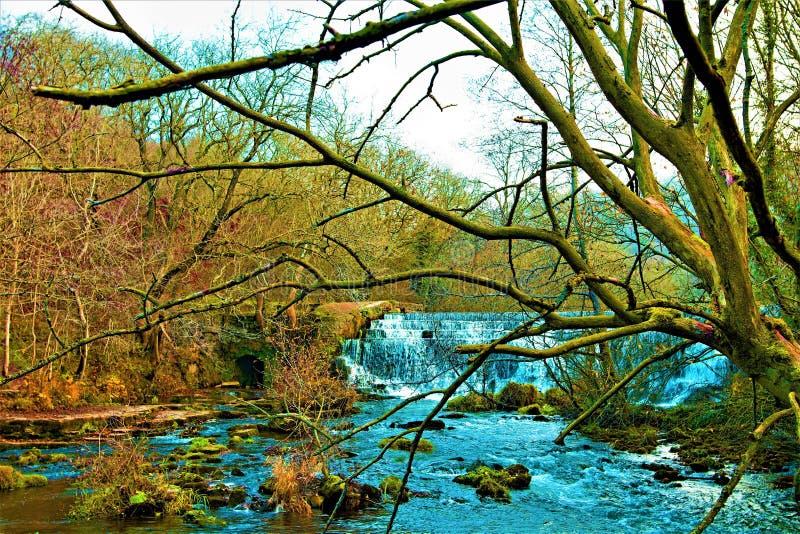 Regione selvaggia di inverno lungo l'ipsilon del fiume, in vallata di Monsal, Derbyshire immagine stock