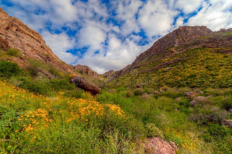Regione selvaggia di Mountan di AZ-Superstizione fotografie stock libere da diritti
