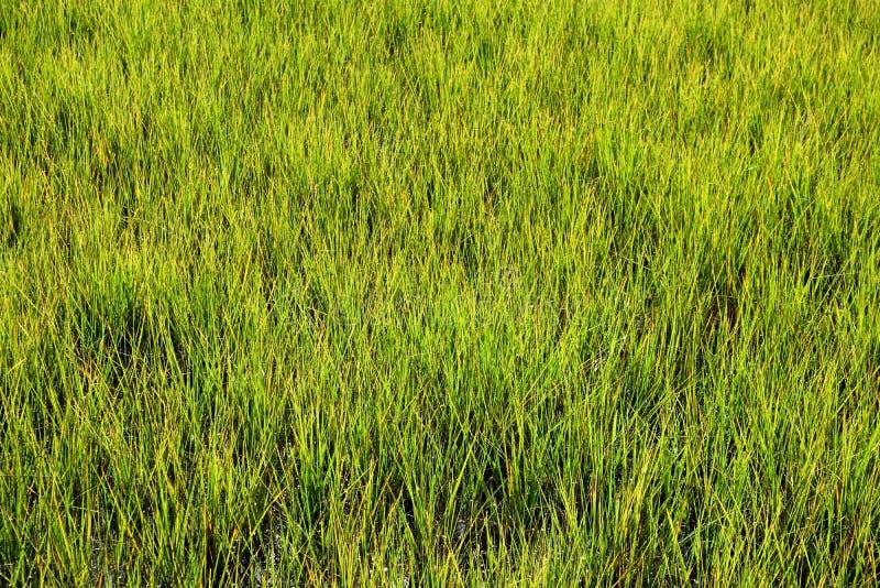 Regiones pantanosas en St Augustine Florida imagen de archivo