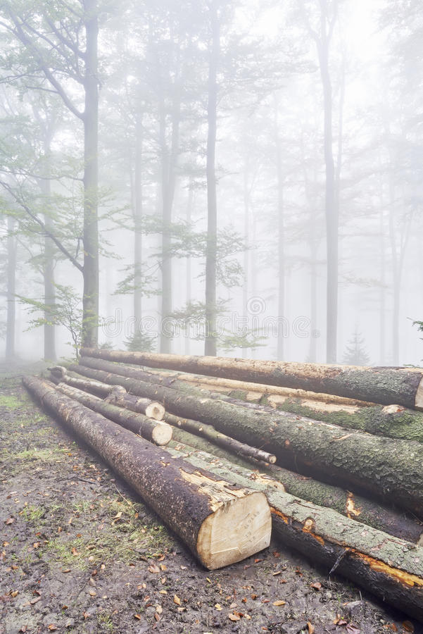Registra gli alberi immagini stock