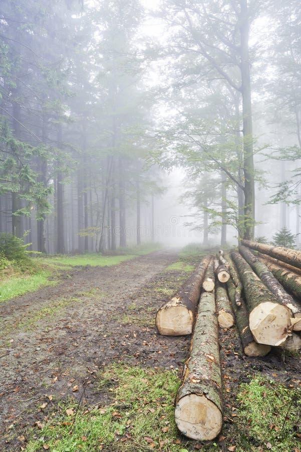 Registra gli alberi immagine stock libera da diritti