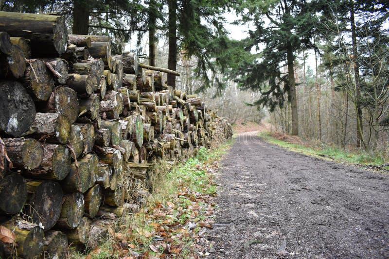 Registre la pila que extiende en la distancia adyacente a una pista de la silvicultura fotografía de archivo libre de regalías