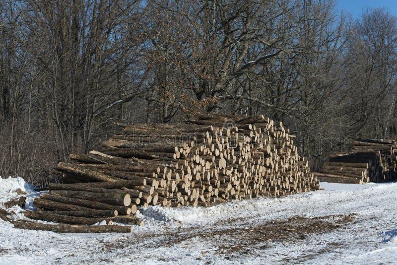 Registreren eiken bomen in Minnesota royalty-vrije stock foto's