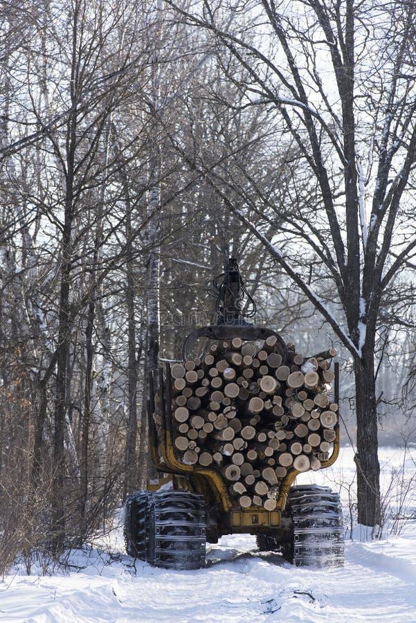 Registreren eiken bomen in Minnesota stock foto