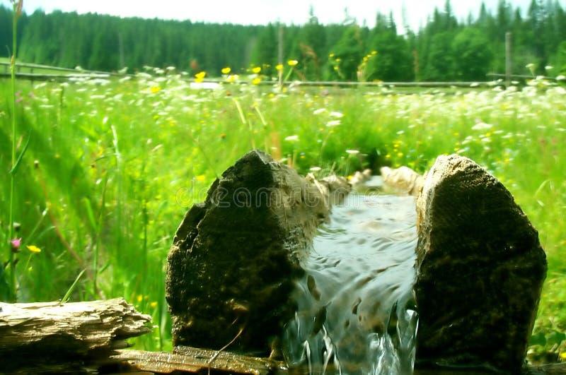 Registro com água fresca fotografia de stock