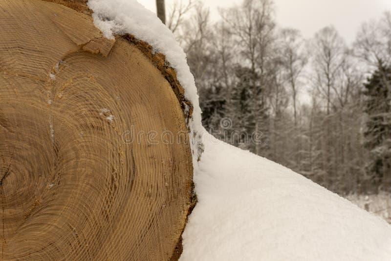 Registro cubierto en una capa de nieve fresca fotos de archivo libres de regalías