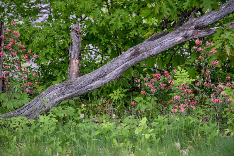 Registro de Falência com Flores de primavera imagem de stock royalty free