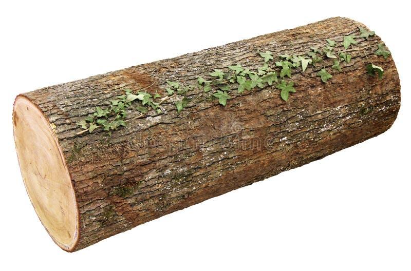 Registro de madeira foto de stock royalty free