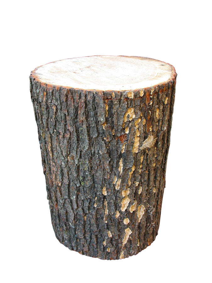 Registro de madeira do vidoeiro isolado no branco foto de stock