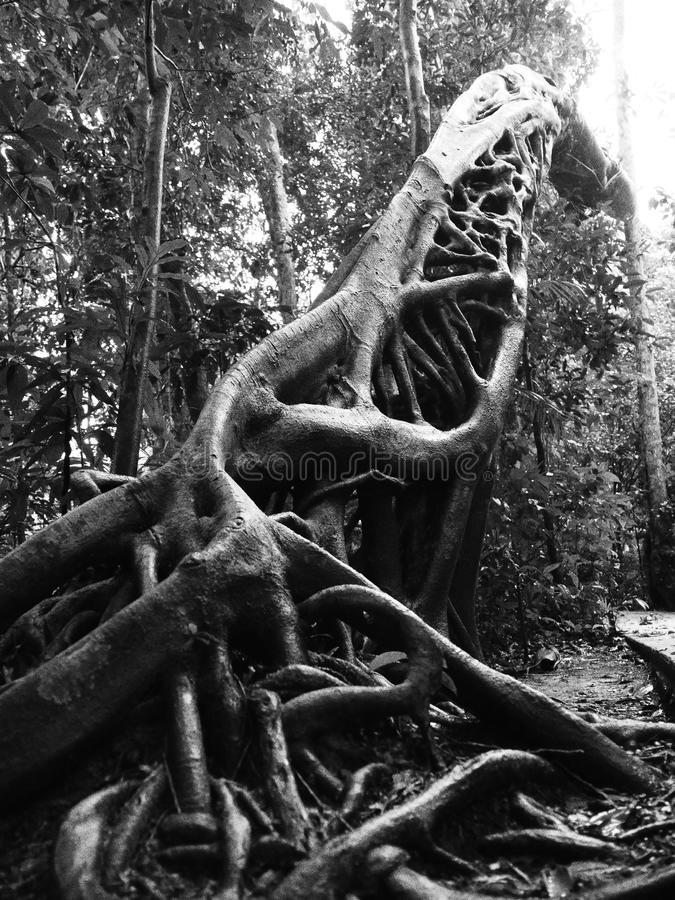 Registro de tres árboles imágenes de archivo libres de regalías