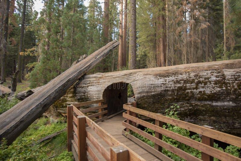 Registro del túnel del parque nacional de secoya imágenes de archivo libres de regalías