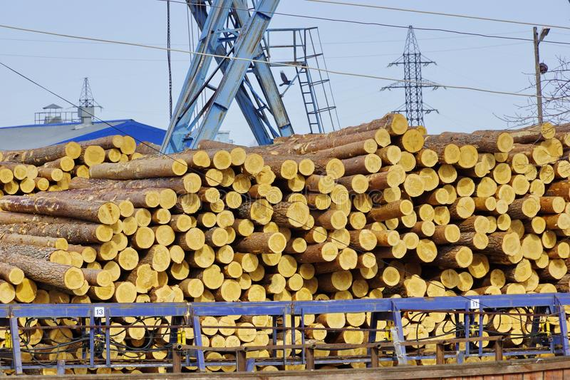 Registro industrial a construção do pinho entra a espera do armazém fotografia de stock royalty free