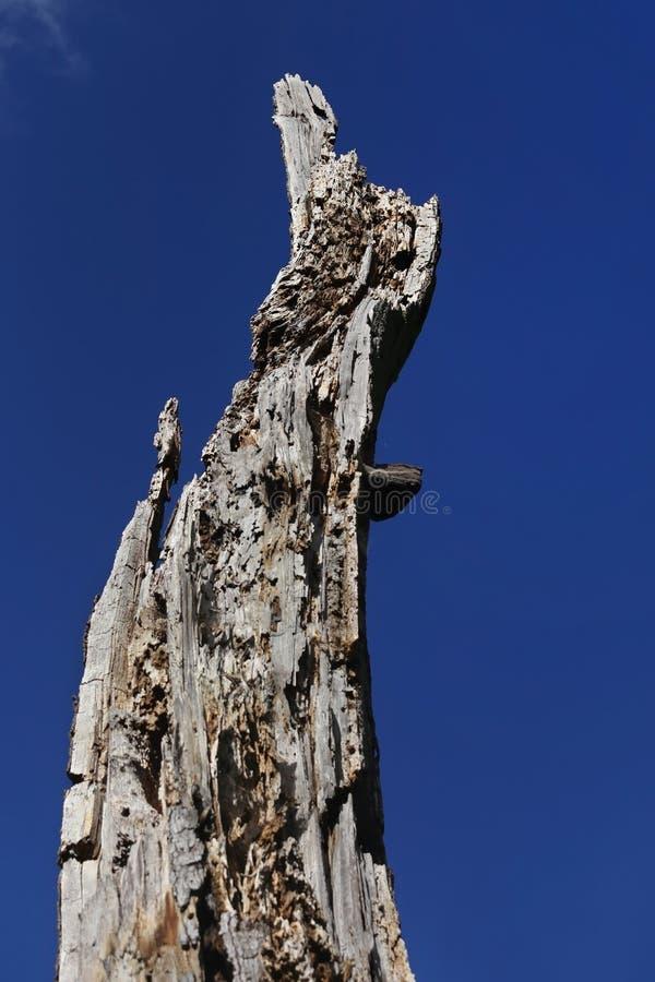 Registro putrefacto de un árbol muerto fotos de archivo