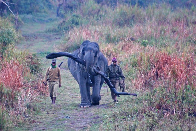 Registro que lleva del elefante con los guardias en Kaziranga imagen de archivo
