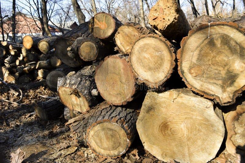 Registros aserrados de árboles foto de archivo libre de regalías