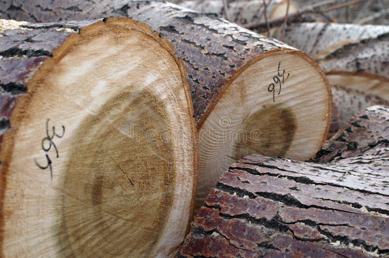 Registros da árvore fotos de stock