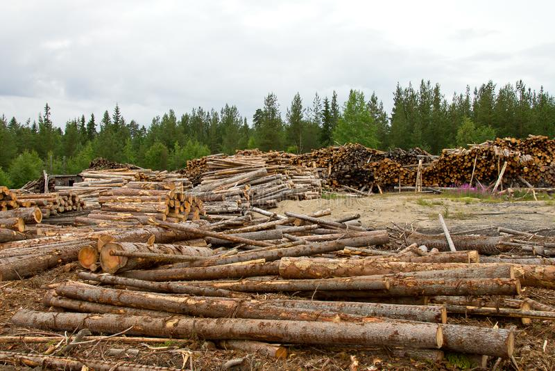 registros de árboles en el bosque después de derribar imagenes de archivo