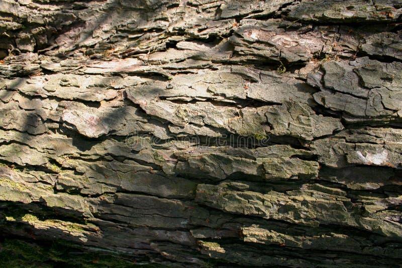 Registros de la madera preparados para el transporte, gestión forestal fotografía de archivo libre de regalías