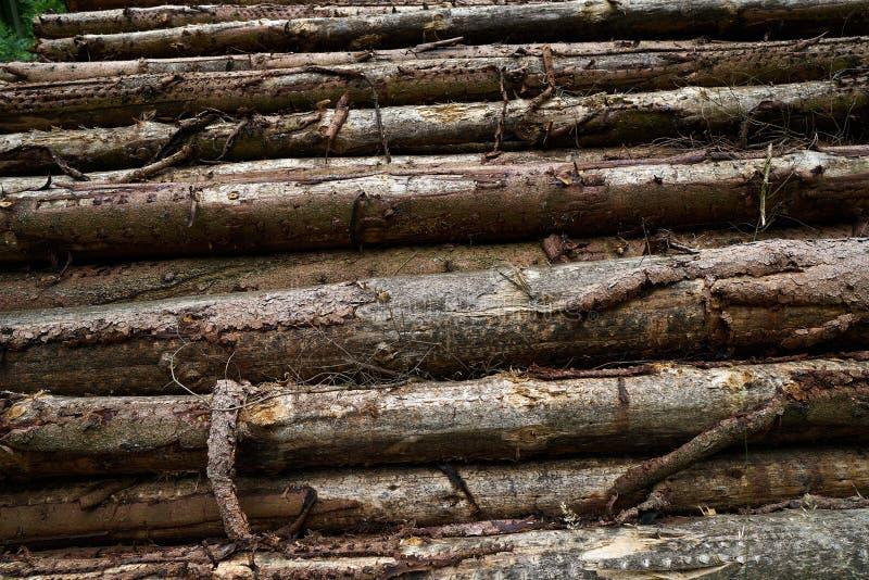 Registros de madera apilados en las montañas Alemania de Harz foto de archivo libre de regalías