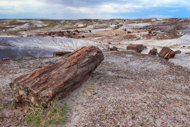 Registros de madera aterrorizados dispersados a través de paisaje, Forest National Park aterrorizado, Arizona, los E.E.U.U. imágenes de archivo libres de regalías