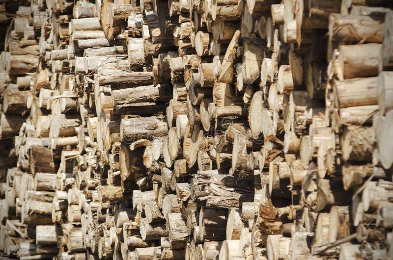 Registros do eucalipto imagens de stock
