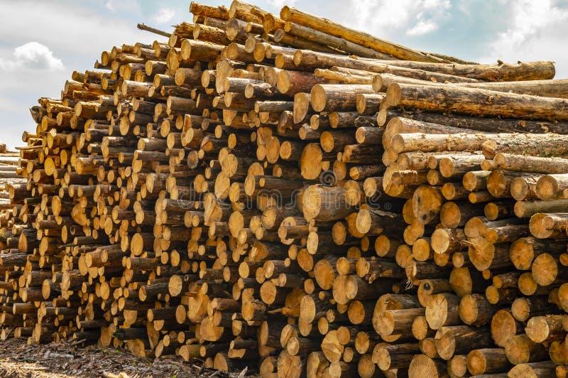 Registros llenados de los árboles de pino - tala de árboles imagen de archivo libre de regalías
