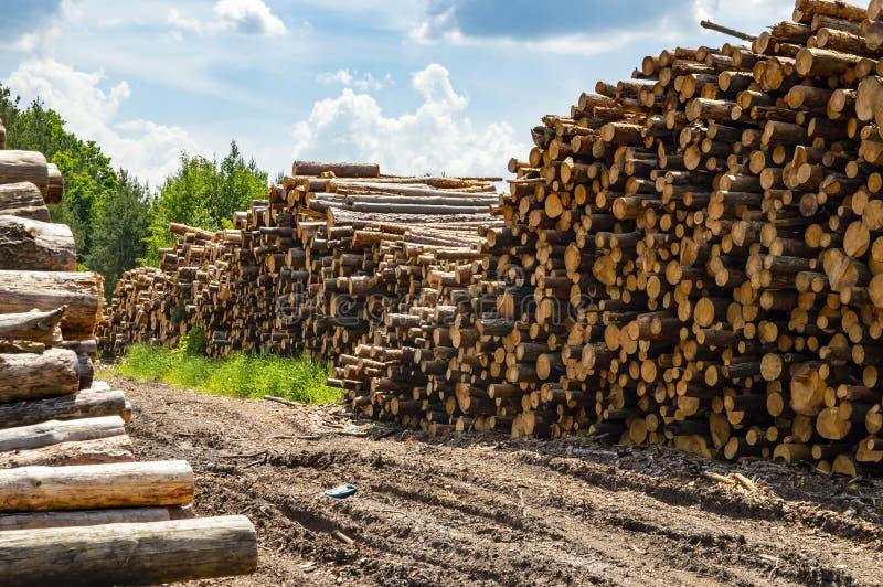 Registros llenados de los árboles de pino - tala de árboles fotografía de archivo