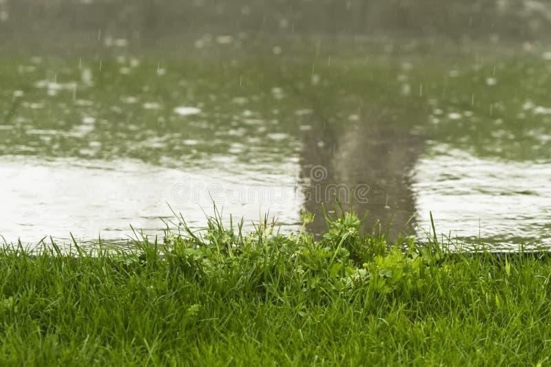 regn arkivfoton