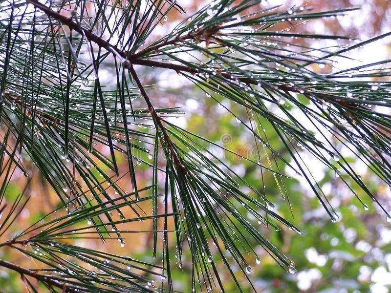 Download Regn fotografering för bildbyråer. Bild av buskar, deciduous - 275501