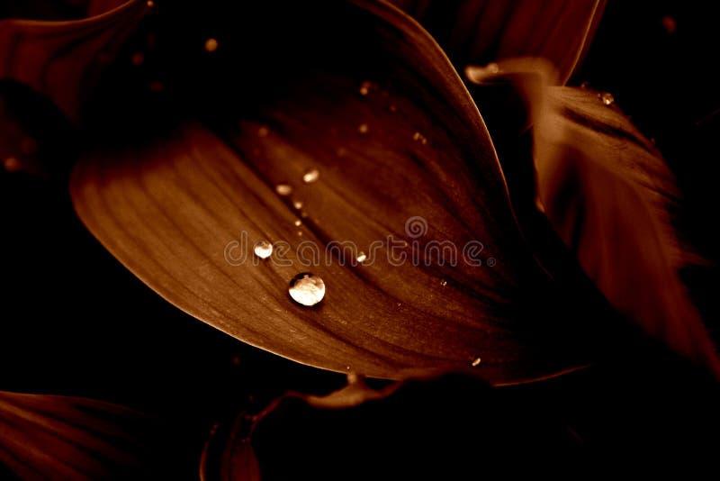 regn för 2 blommor royaltyfria bilder