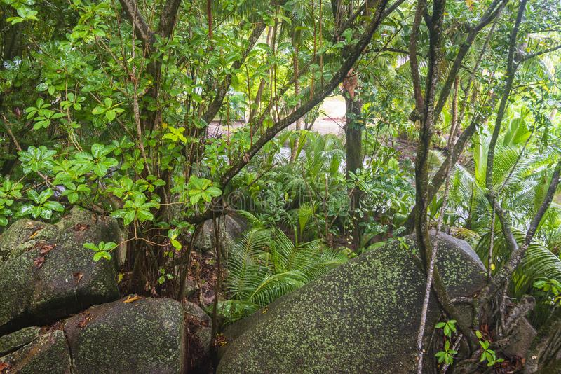 Regn i djungler, Seychellerna royaltyfri bild