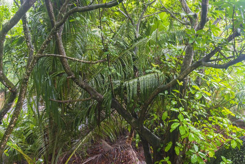 Regn i djungler, Seychellerna royaltyfri fotografi