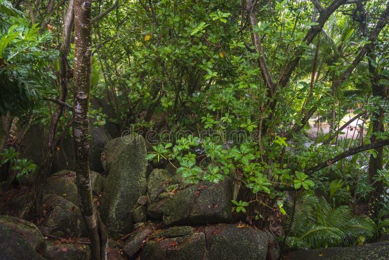 Regn i djungler, Seychellerna fotografering för bildbyråer