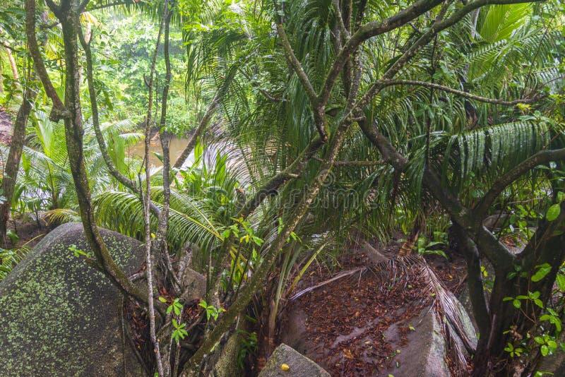 Regn i djungler, Seychellerna arkivbilder