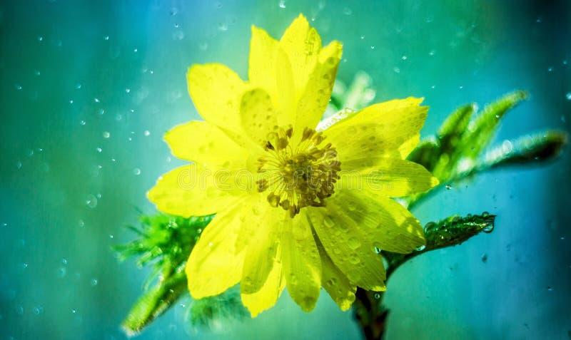 Regn och härlig blomma fotografering för bildbyråer
