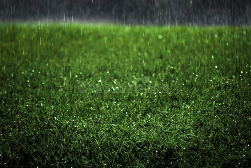Regn som faller på frodig för gräsmattahäftigt regn för grönt gräs storm, tappar droppandevatten royaltyfria foton