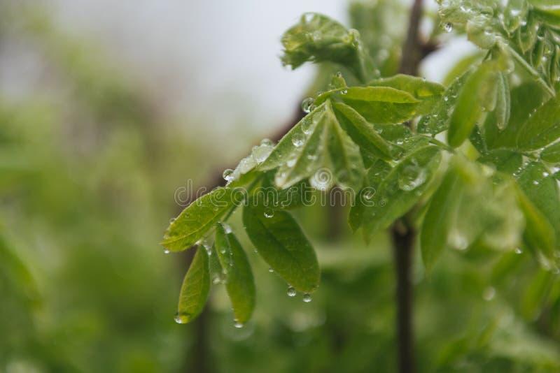 Regn tappar på sidorna av trädet royaltyfria foton